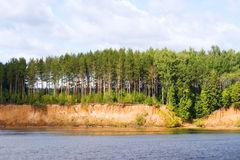 Riverside. On the riverside grow pines Stock Photos