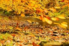 riverside Стоковые Изображения RF