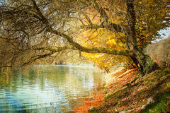 Riverside autumn trees Stock Photos
