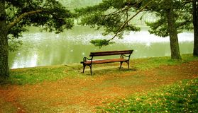 Riverside bench. Lonely bench on the riverside on a misty morning stock images