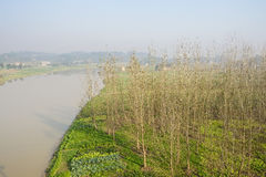 Riverside cultivated vegetable and trees in sunny winter morning. Chengdu,China Stock Photos