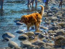 Riverside dog play. stock image