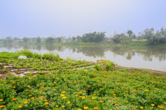 Riverside flowering fields in foggy sunny spring Royalty Free Stock Photography
