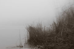 Riverside at foggy morning Stock Photography