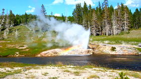 Riverside Geyser of Yellowstone. Riverside Geyser erupts into the Firehole River of Yellowstone National Park - USA stock footage