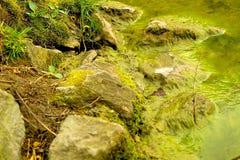 Riverside. Green algae on shore Stock Photos