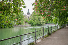 Riverside of isar river munich, with blooming red chestnut trees Royalty Free Stock Photography