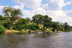 River Chobe,Botswana Royalty Free Stock Images