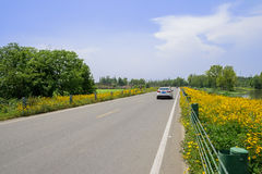 Riverside road in flowering daisies on sunny summer day Stock Images