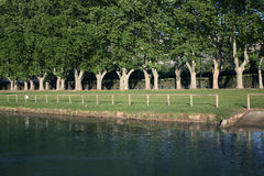 Riverside Row of Sycamore Tree Stock Photo