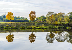 Riverside scene with trees that are reflected in the river Tauber Royalty Free Stock Photography