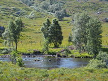 Riverside in Scottish Highlands. A riverside in Scottish Highlands in August, Scotland, UK Royalty Free Stock Photo