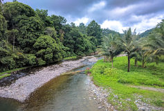 Riverside. Shallow riverside forest with green grass, coconuts, and trees Stock Photo