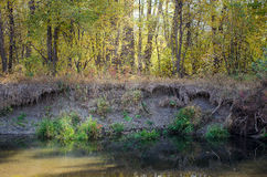 Riverside in the Soft Autumn Morning Light. Close-up of a riverside with a small soil cliff and a forest on it lit with soft sunlight on an autumn morning Stock Photo