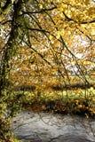 Riverside tree Royalty Free Stock Image