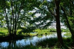 Riverside trees in sunny summer Stock Photos