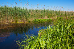 Riverside vegetation Royalty Free Stock Images