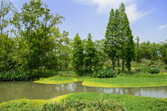 Riverside verdant trees and plants in sunny summer afternoon Royalty Free Stock Photography