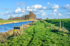 Riverside between water and dike on a sunny winter day Royalty Free Stock Image