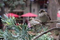 Riverwalk-Vögel Stockfoto