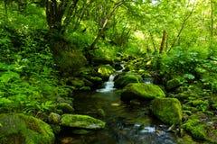 Riverway长满与在山的绿色油漆 免版税库存图片