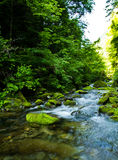 Riverway invade con vernice verde in montagna Fotografie Stock Libere da Diritti