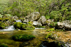 Riverway invade con vernice verde in montagna Fotografia Stock