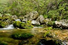 Riverway Overgrow med grön målarfärg i berg Arkivbild