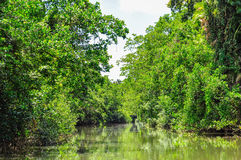 Rivery scenery in Daintree Rainforest, Australia. River scenery in Daintree Rainfoest, Queensland, Australia Stock Photography