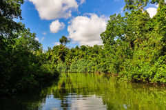 Rivery scenery in Daintree Rainforest, Australia. River scenery in Daintree Rainfoest, Queensland, Australia Royalty Free Stock Image