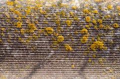 Rivestimento dell'amianto Fotografie Stock Libere da Diritti