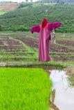 Rivestimento di lisu dello spaventapasseri nel giacimento del riso, Tailandia Immagine Stock