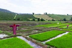 Rivestimento di lisu dello spaventapasseri nel giacimento del riso, Tailandia Fotografia Stock Libera da Diritti