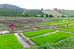 Rivestimento di lisu dello spaventapasseri nel giacimento del riso, Tailandia Immagini Stock Libere da Diritti