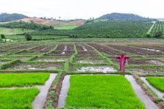 Rivestimento di lisu dello spaventapasseri nel giacimento del riso, Tailandia Fotografia Stock