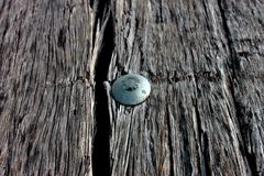 Rivet. A rivet in weathered wood Stock Image