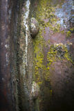 Rivets på ridit ut belägger med metall, grund DOF Royaltyfri Foto