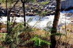 Rivière près de hjälpl'Etang Arkivbild