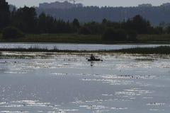 Rivière à l'aube et la silhouette d'un pêcheur dans un bateau dans la distance La réflexion du ciel dans l'eau Fond, ple Photographie stock libre de droits