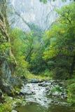 Rivière étroite dans forrest de la Transylvanie Photos stock