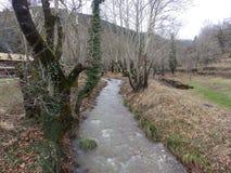 Rivière étroite dans les bois photographie stock libre de droits