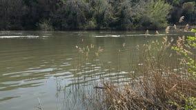Rivière avec des usines et des arbres photos libres de droits