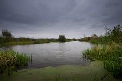 Rivière avec la canne verte avec le ciel de mystère  Image libre de droits
