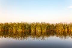 Rivière avec le roseau en Frise, Pays-Bas Image libre de droits
