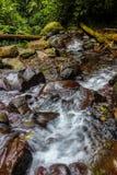 Rivière avec le tronc d'arbre photo libre de droits