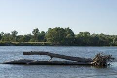 Rivière bleue fonctionnant avec des réflexions dans l'eau Couleur bleue profonde de l'eau et des silhouettes de grands arbres Photos libres de droits