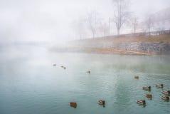 Rivière brumeuse et canards sauvages Images libres de droits