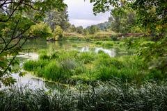 Rivière calme pendant le matin d'été avec les arbres verts sur le fond image stock