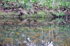 Rivière claire Photo stock