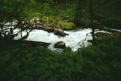 Rivière claire de courant de l'eau dans le paysage de forêt Photo libre de droits
